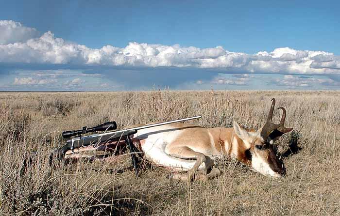 Diy Muley Antelope Hunt Huntingnet Com Forums
